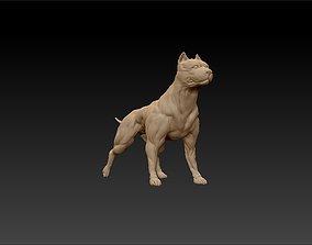 3D printable model standing muscular american pitbull 1