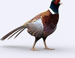 3DRT - Pheasant animated VR / AR ready