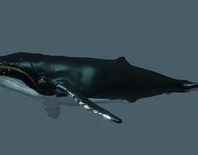 3D Humpback Whale rigged animated
