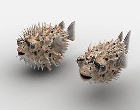 Puffer Balloonfish Porcupinefish 3D model