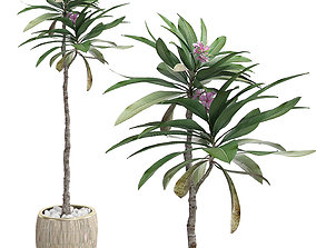 3D Potted Plant 26