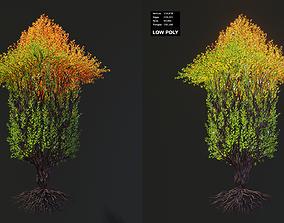 Tree in a shape of an arrow 3D model
