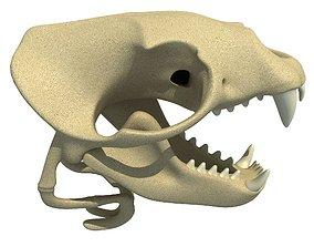 3D Sea Lion Zalophus Skull
