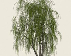 Game Ready Willow Tree 03 3D asset