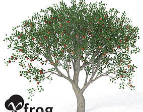 XfrogPlants Apple 3D