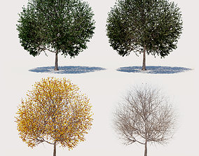 3D 4 seasons ELM tree collection