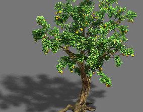 3D model Woods - orange trees
