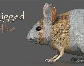 Mouse Rat 3D model