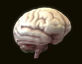 3D Human Brain gland