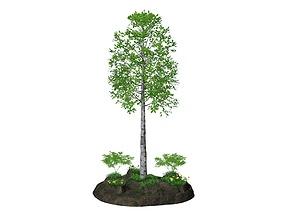 Birch 3D model other