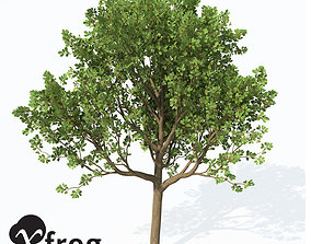 3D model XfrogPlants Downy Oak