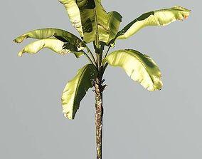 3D model Realistic Banana Plant