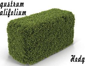 Hedge Box 3D model
