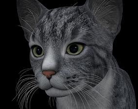 3D ANML-0001 Cat