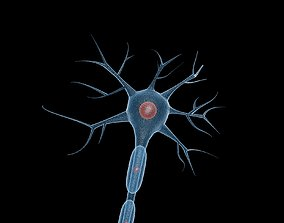 3D model neurons Neuron
