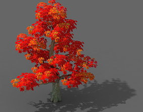 Forest - Maple Tree 13 3D