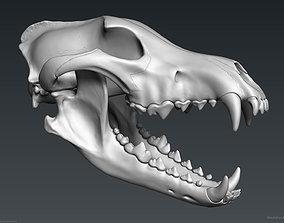 anatomical 3D Wolf Skull - Highpoly sculpture