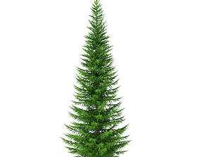3D model Norway Spruce Picea abies 7m