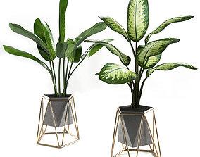 Plants set 3 3D