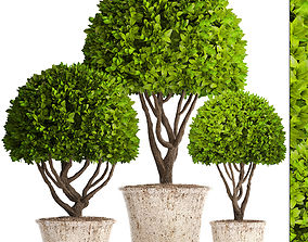 Topiary trees potted 3D model
