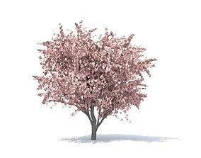 3D Apple tree leaves