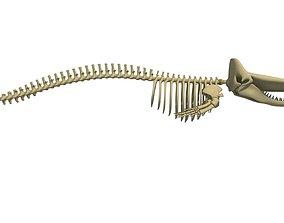 3D model Sperm Whale Skeleton