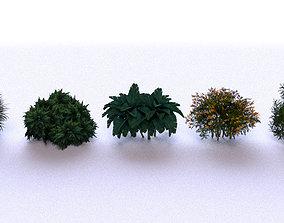 3D asset Garden Bush