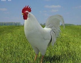 Rooster Leghorn Leghorn 3D asset
