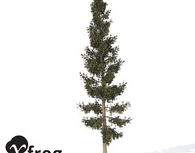 3D XfrogPlants California Red Fir