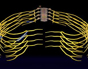 3D Spinal cord symphathetic intercostal nerve labelled