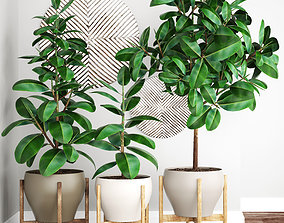 Ficus Robusta tree 3D model