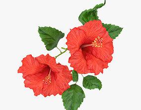Hibiscus 3D