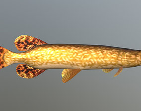 3D model animated Northern pike