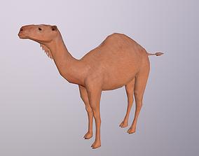One Hump Camel Dromedary 3D model