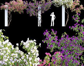 Bougainvillea 07 3D model