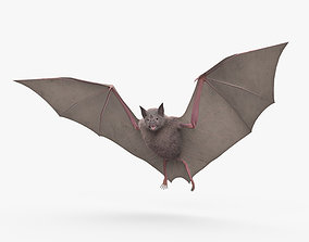 3D model Common Bat HD