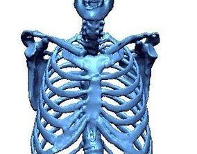 bone Human skeleton 3D print model