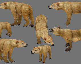 polar bear 3D asset rigged