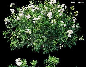 3D model Rose plant set 63