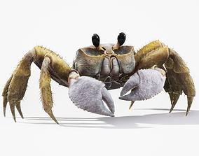 3D asset Ghost Crab