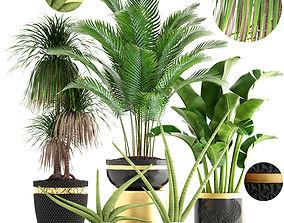 botanical Collection plants 3D