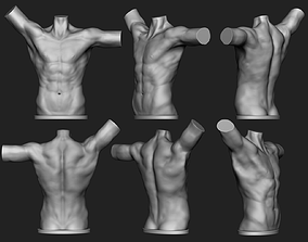 Male torso 3D print model art
