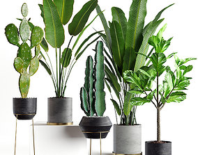 Collection plants 05 3D monstera