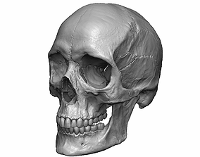 Female human skull- realistic 3d print model- 3 scales 1