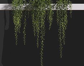 3D model Tarlmounia elliptica Curtain creeper-06