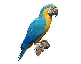 3D asset Blue and Gold Macaw