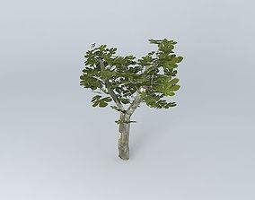 3D plant Fig tree
