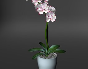Realistic orchid 3D