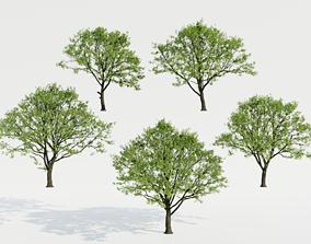 3D Common Trees