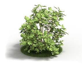 Leafy Fig Plant 3D